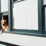 Jak zrobić budę dla psa?